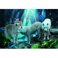 Buy cheap Pet / Pvc / PP Wolf Animal Photos Lenticular 3d Posters For Store Eco - Friendly product