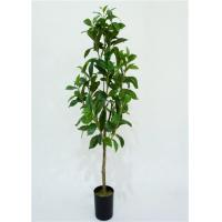 Buy cheap 90cm Artificial Decorative Trees No Maintenance Required Everlasting Tropical Look product