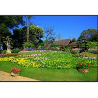 China Green Landscaping Artificial Grass, high density and cost effective on sale