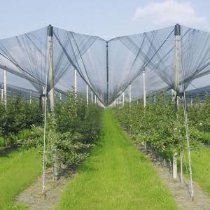Buy cheap Anti-Hail Net for Trees,Garden,Vegetables and Fruit,3.6-5.0cm oepning,white,green,black product