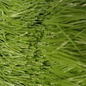 Buy cheap Artificial Soccer Grass / Artificial Grass Waterproof product