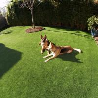 Buy cheap Pet Friendly Artificial Grass No Harm To People Personal Villa Different Pile Height product