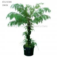 Buy cheap Curving Stem Artificial Fern Tree , Fake Fern Tree Green Lush Foliage 230CM product