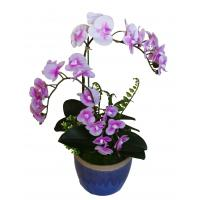 Buy cheap Wholesale Potted Silk Orchids from wholesalers