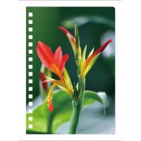 0.6mm Thickness Plastic Cover Spiral 3D Lenticular Notebook 80 Pages A4/A5/A6