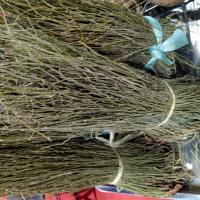 Buy cheap Dried EPHEDRA HERB segments natural Ephedrae herba whole parts for traditional medicine ma huang from wholesalers