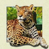 Buy cheap 5d Animal Collage Poster Of 15.7x15.7 Inches Custom Lenticular Printing For Gift. product