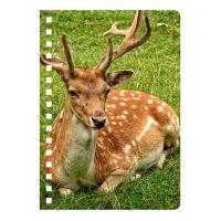 Quality Eco-friendly PET 3D Lenticular Notebook , Custom Print A5 Exercise Book for sale