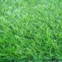 Buy cheap Natural Fitness Green Plastic Turf Grass Mat For Gym Flooring Long Lasting product