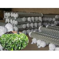 Quality Galvanized chain link fence for sale