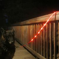 Buy cheap Super Bright Illuminated Dog Leash Runs Over 7 Hours For Dogs Walking Training product