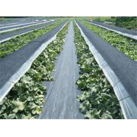 Buy cheap Geotextile Stabilization Fabric , PP Woven Geotextile Separation Fabric For Farm / Plants product