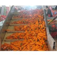 Buy cheap Shandong  New Crop No Cracks Or Violet Top Fresh health benefits carrot product