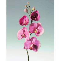 Buy cheap Artificial Orchid Flowers product