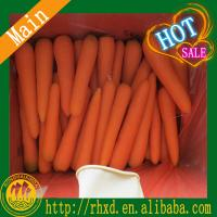 Buy cheap 2015 new corp Chinese fresh carrot product