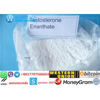 Wholesale TestosteroneEnanthate for bodybuilding Fast Acting CAS No:315-37-7 Testosteron Steroids Powder