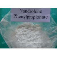 Medical Nandrolone Phenylpropionate Steroid Hormones Powder Source Durabolin Nandrolone