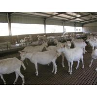 Buy cheap H Beams Poultry Farm Structure Galvanized Water Gutter Drainage System product