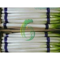 Buy cheap chinese scallion exporter product