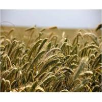 Buy cheap Agriculture Agricultural Inoculants - Global Market Outlook (2016-2022) product