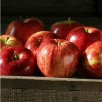 Buy cheap GALA APPLES NO.31 deliver gift hamper to shenzhen product