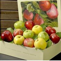 Buy cheap APPLE MEDLEY NO.39 deliver gift hamper to shenzhen product