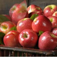 Buy cheap PINK LADY APPLES NO.30 deliver gift hamper to shenzhen product