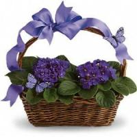 China Birthday Violets And Butterflies .No.19 delivery birthday gift to sydney on sale