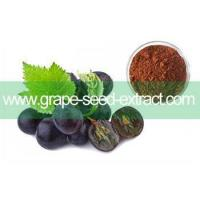 Buy cheap Grape Seed Extract / Grape Seed P.E. / GSE product