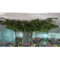 Buy cheap Simulation of banyan trees from wholesalers
