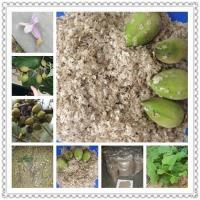 Buy cheap Kiri seeds with phyto certificate product