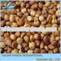 Agriculture new crop red sorghum large quantity of red Sorghum