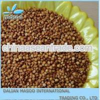 Agriculture Chinese Organic Red Sorghum for sale