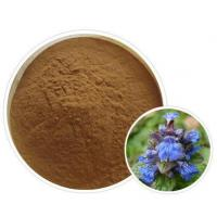 Ajuga Reptans Extract(Carpet Bugle Extract)