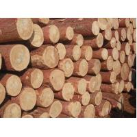 Import logs Russian larch