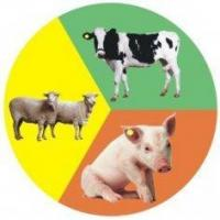 China  Animal Rfid Tags Mango,YX  for sale