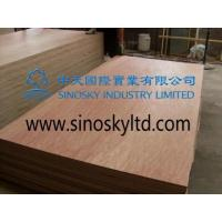Buy cheap Commercial plywood Model No: bintangor face plywood product