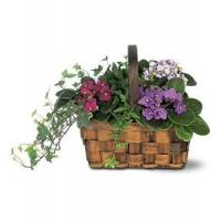 China Mixed African Violet Basket on sale